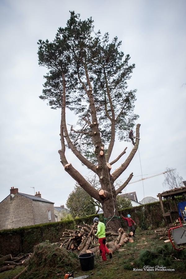 abattage-arbre-atlantique-elagage-loire-guenrouet-grimpeur-broyeur-arbres-grande-taille-1