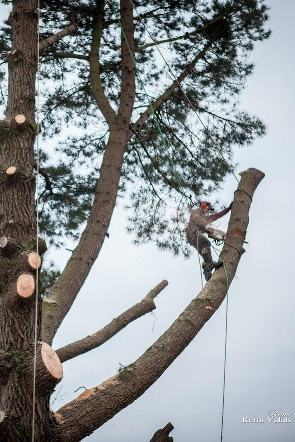 abattage-arbre-atlantique-elagage-loire-guenrouet-grimpeur-broyeur-arbres-grande-taille-2