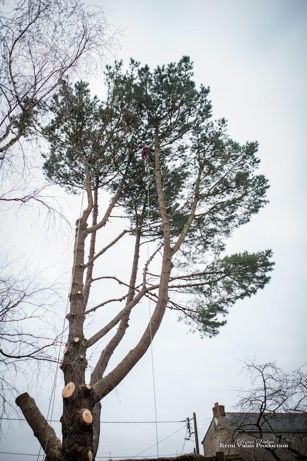 abattage-arbre-atlantique-elagage-loire-guenrouet-grimpeur-broyeur-arbres-grande-taille-3