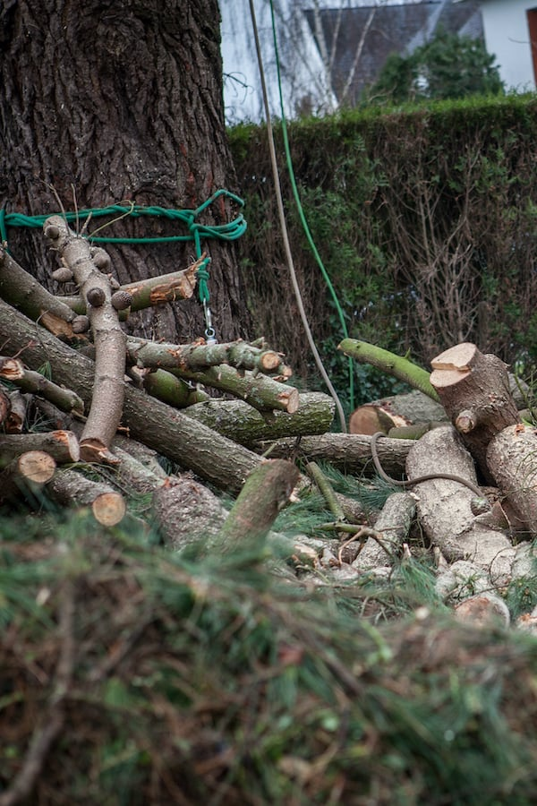 abattage-arbre-atlantique-elagage-loire-guenrouet-grimpeur-broyeur-arbres-grande-taille-4