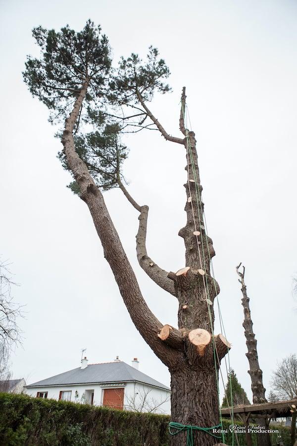 abattage-arbre-atlantique-elagage-loire-guenrouet-grimpeur-broyeur-arbres-grande-taille-6