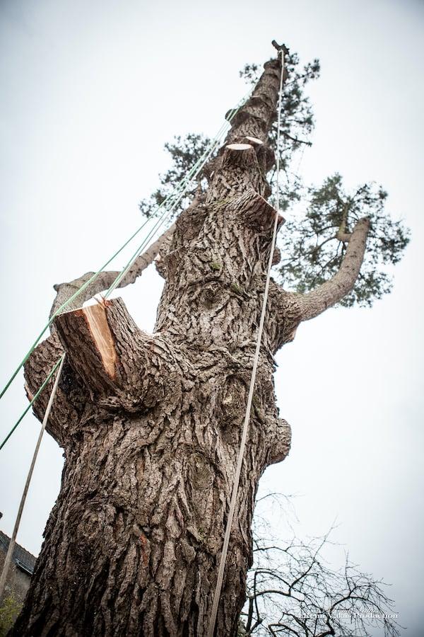 abattage-arbre-atlantique-elagage-loire-guenrouet-grimpeur-broyeur-arbres-grande-taille-7